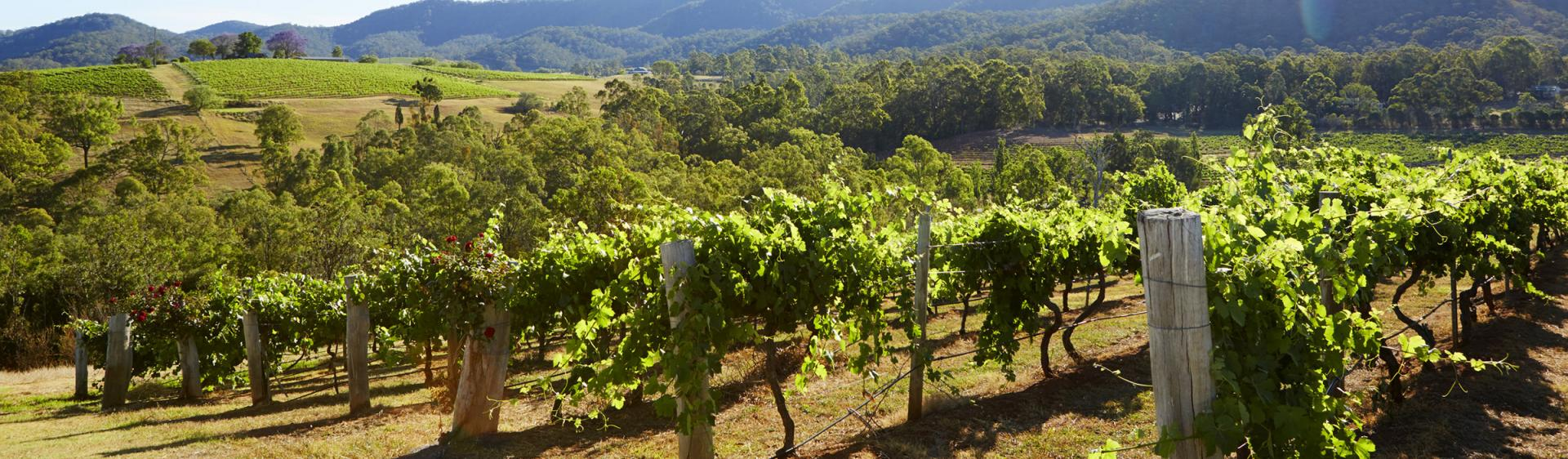 Audrey Wilkinson Vineyard, Pokolbin, Hunter Valley